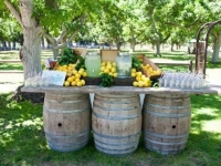Wine Barrels / Qty 6